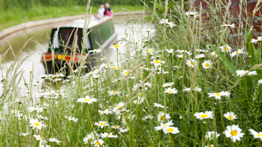 Flowers in foreground with narrowboat and canal in background
